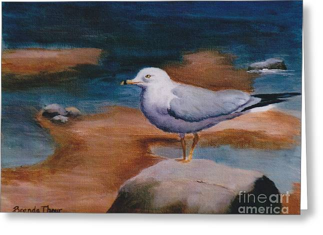 Greeting Card featuring the painting Seagull by Brenda Thour