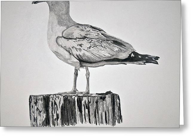 Seagull Greeting Card by Chamar Radloff