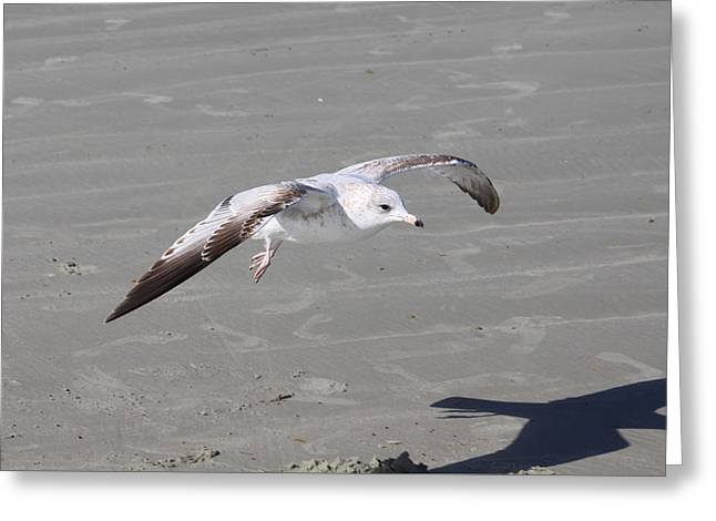 Greeting Card featuring the pyrography Seagull by Chris Thomas