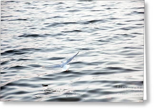 Seagull Greeting Card by Ciprian Kis