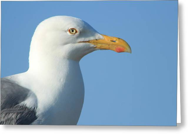 Seagull  Greeting Card by Diane Rada