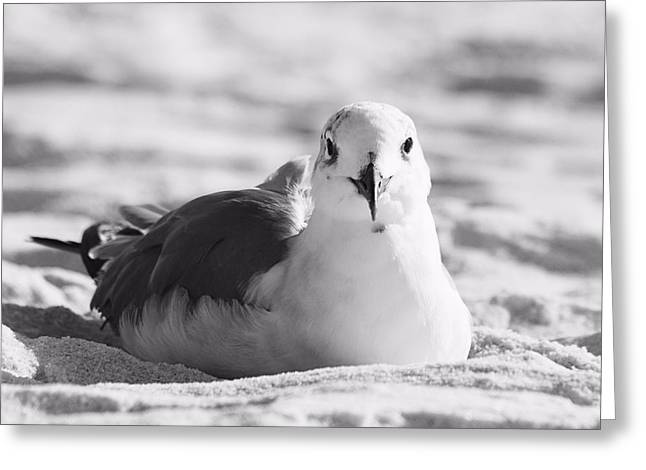 Greeting Card featuring the photograph Seagull by Elizabeth Budd