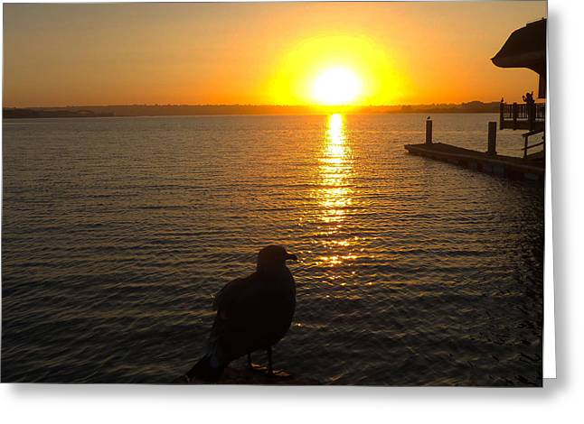 Seagull Enjoys The Sunset Greeting Card by William  Dorsett