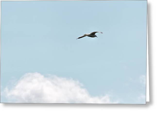 Greeting Card featuring the photograph Seagull Flying High by Leif Sohlman