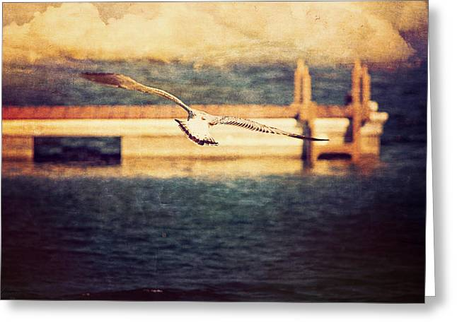 Seagull Flying Greeting Card by Maria Angelica Maira