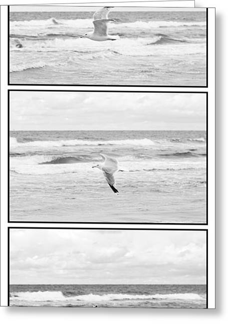 Seagull Flying  Greeting Card by Tommytechno Sweden