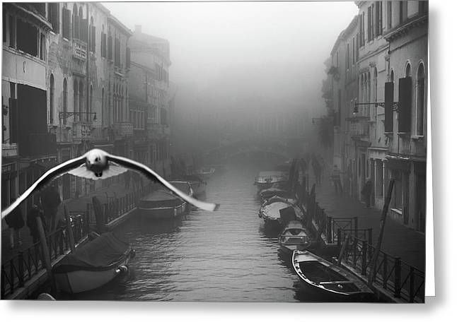 Seagull From The Mist Greeting Card