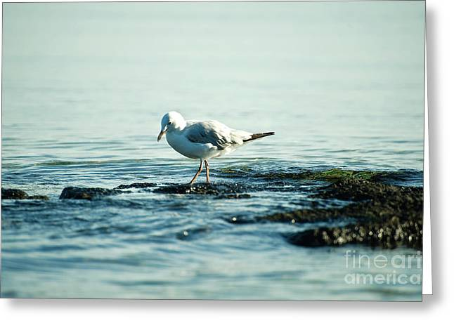 Seagull Hunting Greeting Card by Yew Kwang