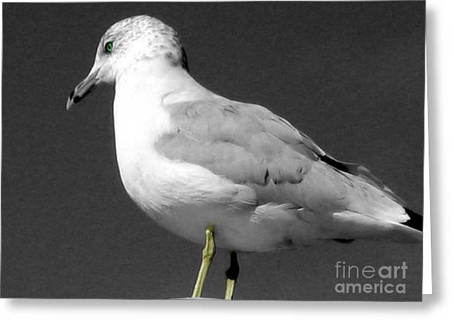 Greeting Card featuring the photograph Seagull In Black And White by Nina Silver