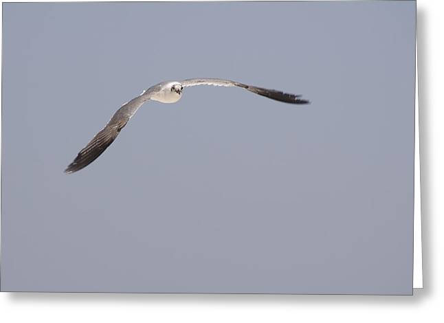 Greeting Card featuring the photograph Seagull In Flight Against A Blue Sky by Charles Beeler