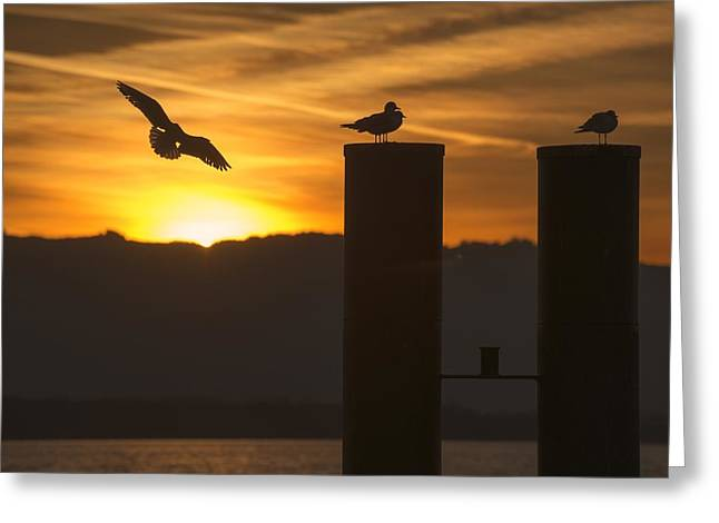 Seagull In The Sunset Greeting Card by Chevy Fleet