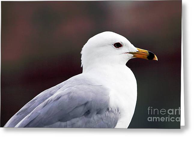 Seagull Greeting Card by John Rizzuto