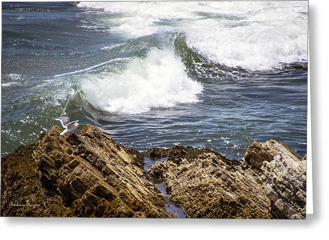 Seagull Landing Pismo Beach Seascape Greeting Card by Barbara Snyder