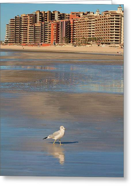 Greeting Card featuring the photograph Seagull Motel by Alicia Knust