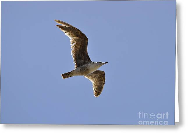 Seagull N Light  Greeting Card