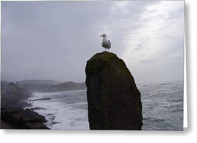 Seagull On A Boulder Greeting Card by Yvette Pichette