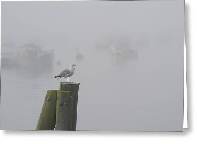Seagull On A Foggy Morning Greeting Card
