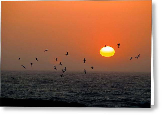 Greeting Card featuring the photograph Seagull On Sunset by William Havle