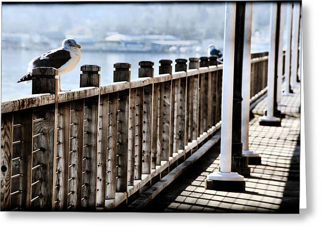 Seagull On The Boardwalk Greeting Card by Sally Bauer