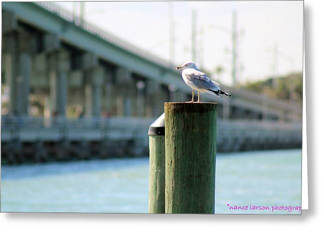 Seagull On The Dock Greeting Card by Nance Larson