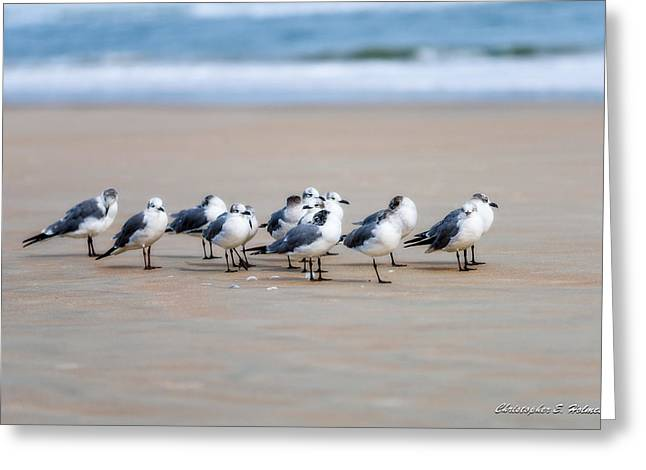 Seagull Parking Greeting Card by Christopher Holmes