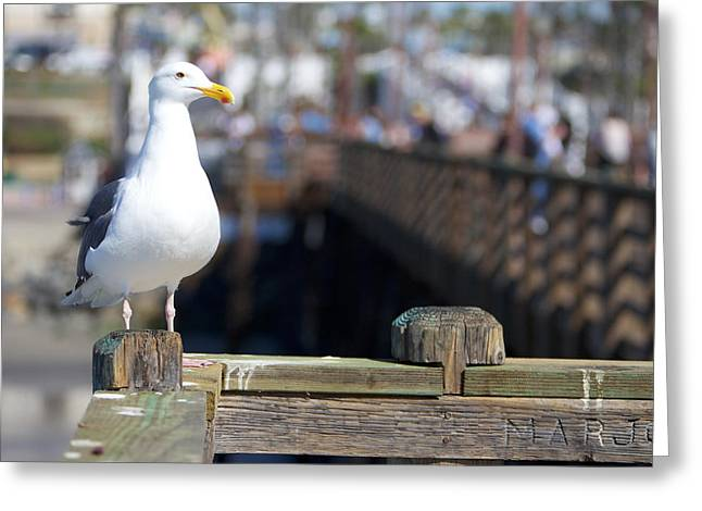 Seagull Greeting Card by Robert  Aycock