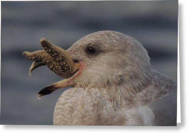 Seagull Series Greeting Card