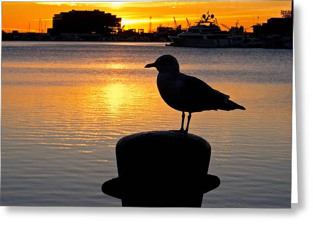 Seagull Silhouette Sunrise Greeting Card