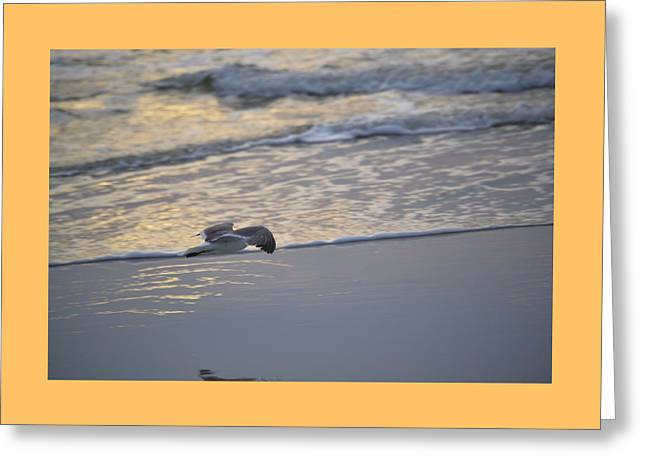 Seagull Soaring Along The Beach Greeting Card by James Fowler