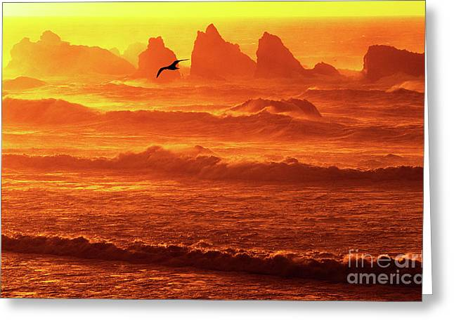 Greeting Card featuring the photograph Seagull Soaring Over The Surf At Sunset Oregon Coast by Dave Welling