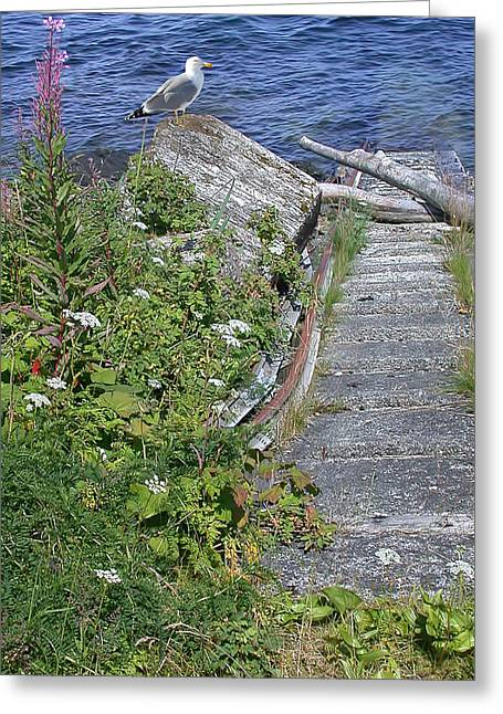 Seagull Steps Guard Island Alaska Greeting Card by Bellesouth Studio