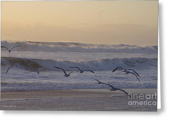 Seagull Sunrise Greeting Card by Tannis  Baldwin