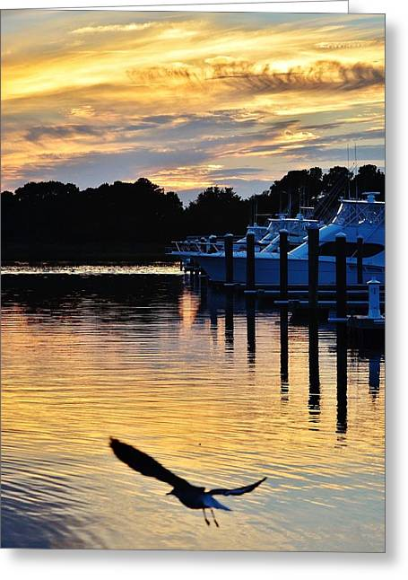 Seagull Sunset At The Indian River Marina Delaware Greeting Card