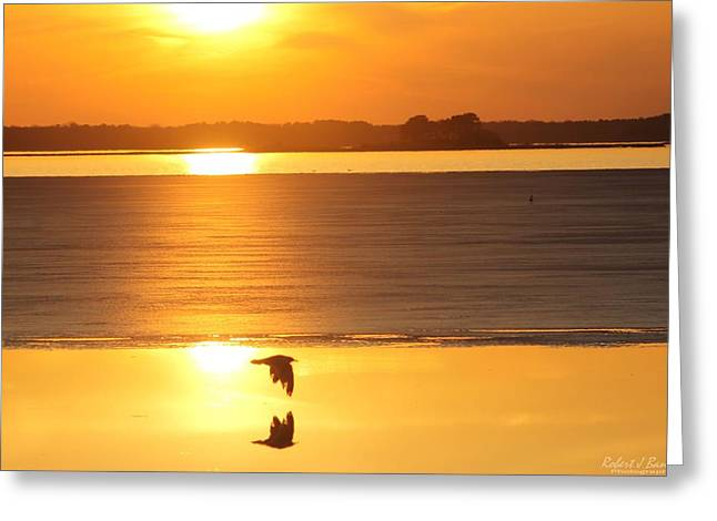 Seagull Through Sunset Greeting Card