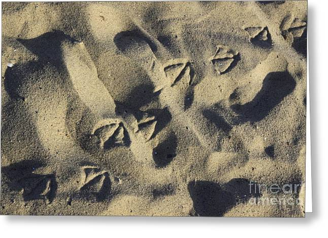 Seagull Tracks Greeting Card