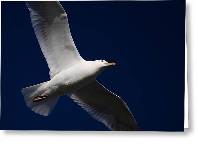 Seagull Underglow Greeting Card