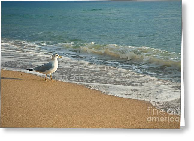 Seagull Walking On A Beach Greeting Card by Sharon Dominick