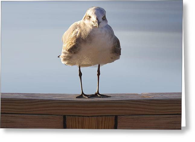 Seagull With An Attitude  Greeting Card by Mike McGlothlen