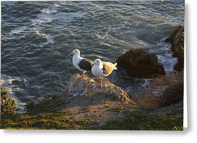 Seagulls Aka Pismo Poopers Greeting Card by Barbara Snyder