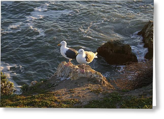 Seagulls Aka Pismo Poopers Greeting Card