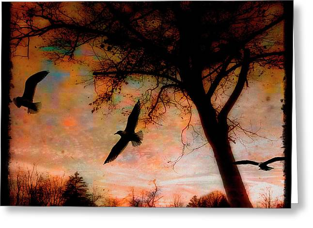 Seagulls At Dusk Greeting Card by Gothicrow Images