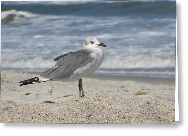 Seagulls At Fernandina 2 Greeting Card by Cathy Lindsey