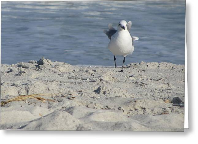 Seagulls At Fernandina 4 Greeting Card