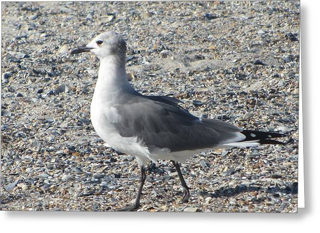 Seagulls At Fernandina 5 Greeting Card by Cathy Lindsey