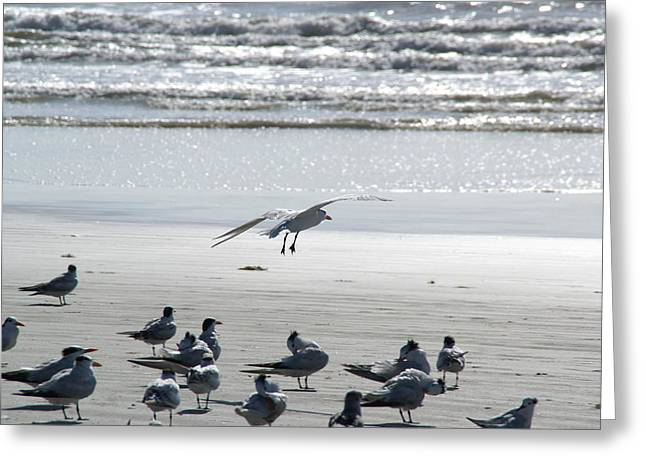 Seagulls By The Seashore Greeting Card by Patricia Twardzik