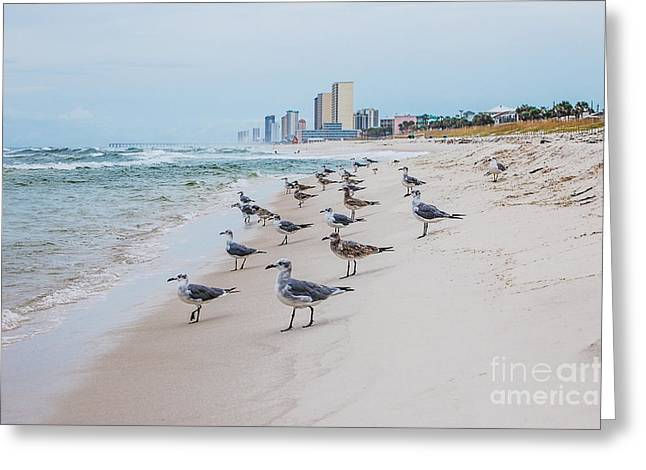 Seagulls Convention Greeting Card
