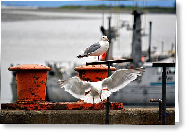 Seagulls Expression Greeting Card by Debra  Miller