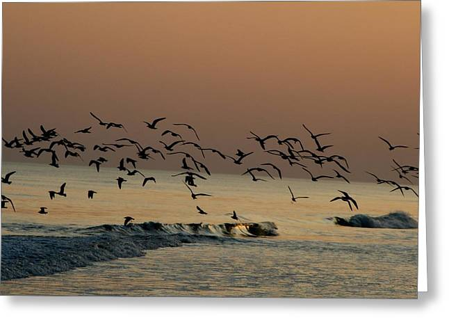 Seagulls Feeding At Dusk Greeting Card by Beth Andersen