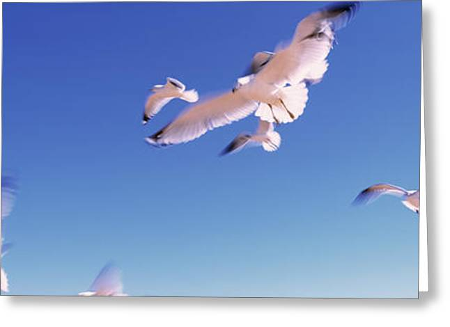 Seagulls Flying Along Route A1a Greeting Card