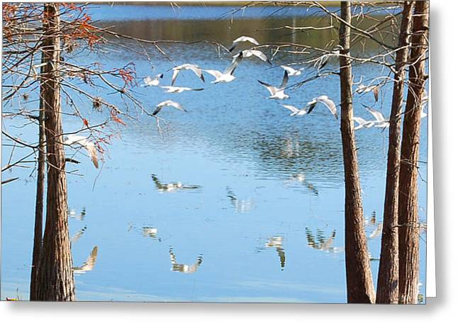 Seagulls Flying Over Water With Reflections Greeting Card